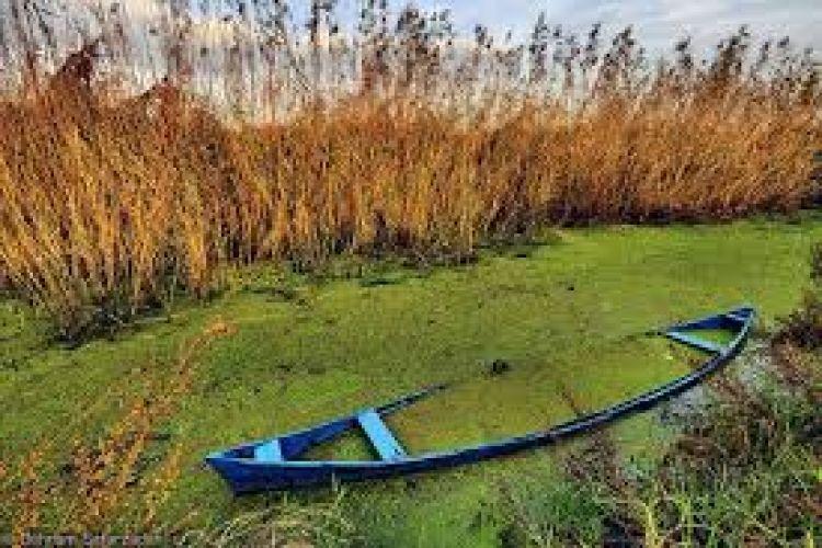 تخصیص منابع بیشتر برای احیای تالاب انزلی لازم و ضروری است