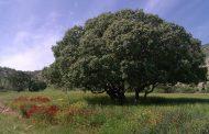 سوسکهای چوبخوار بلای درختان بلوط زاگرس+طنز رادیویی