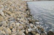 لاشه کوسهها در سواحل جزیره شیف بوشهر+طنز رادیویی
