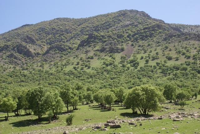 جنگلهای دستکاشت در لرستان توسعه یابد