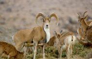 خشکسالی مهمترین عامل تهدید حیات وحش ایران است