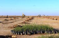کنترل ۳۵۰ هزار هکتار از کانون های ریزگرد خوزستان در مدت ۵ سال