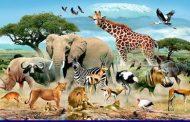 زمین در مسیر تجربه انقراض انبوهی از گونهها