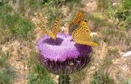 پروانهها شاخص سلامت اکوسیستم هستند
