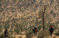 نیمی از درختان بلوط زاگرس بیمارند و در خطر خشک شدن