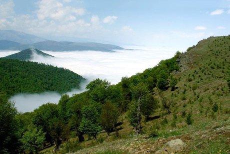 حفظ جنگلهای زاگرس در گرو عزم جدیتر مسئولان و بودجههای بیشتر