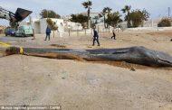 این روزها نهنگها حساس شدهاند