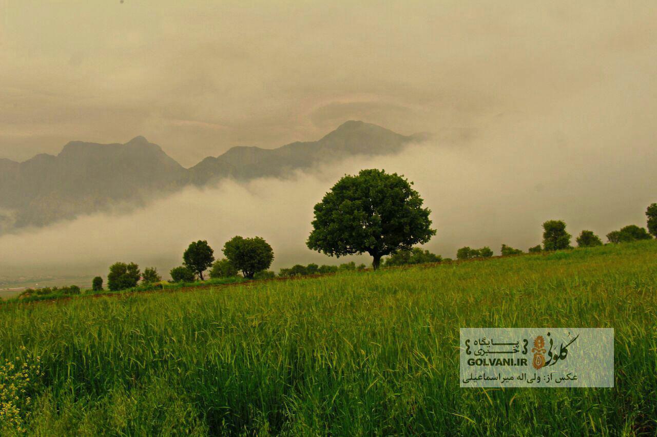 یافته و مله شونو در یک روز بارانی و مهآلود