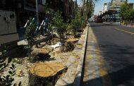 تخریب درختان جلو چشم شهرداریها