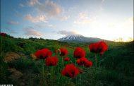 گل عزیز است غنیمت شمریدش صحبت