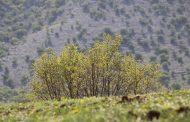 طبیعت لرستان از فروردین تا اواخر شهریور
