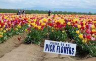 هر گل نشانه بهار نیست