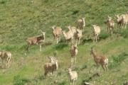 دستگیری شکارچی غیرمجاز در حین شروع به شکار