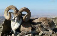 تاراج طبیعت ایران به بهانه یک مشت دلار