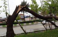 کسی به فکر هرس کردن درختان نیست