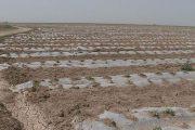 ممنوعیت کشت زیرنایلونی از مهرماه در بوئین زهرا