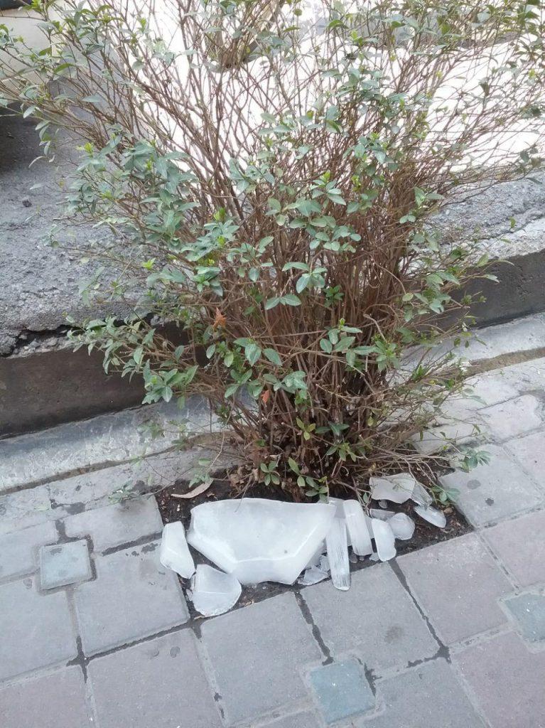 آب دادن به درخت با یخ