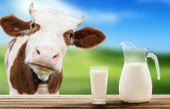 گاوها هم کار درست را انجام میدهند