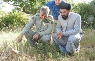 رهاسازی دو بهله پرنده شکاری با حضور امام جمعه شهرستان آبیک