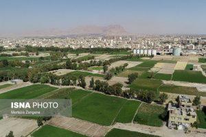 اصفهان و برنج کاری