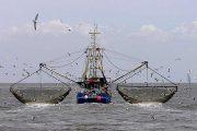 یقه برای خزر پاره شد تا شناورهای چینی خلیج فارس را بخورند