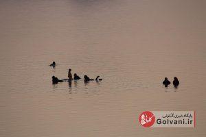 شنا در دریاچه ارومیه
