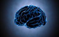 آنها که احتکار میکنند مغز ندارند