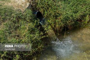کشت محصول آب بر برنج در اصفهان