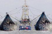 چینیهای بیچشم و رو و صید فانوس ماهی