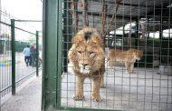 باغ وحش مشهد عجیب است