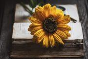 توصیههایی از ربکا سولنیت برای نویسنده شدن