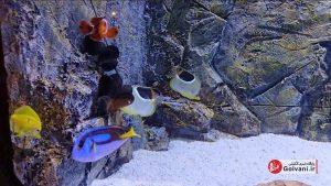 ماهی ها در آکواریوم منطقه آزاد انزلی
