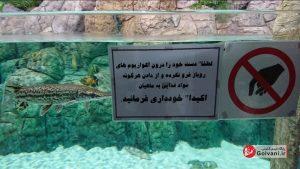هشدار در آکواریوم منطقه آزاد انزلی