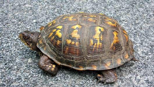 روش لاکپشتها