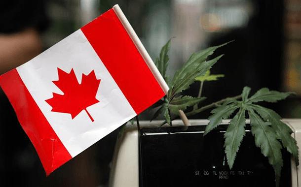چرا ماریجوانا در کانادا آزاد شد؟