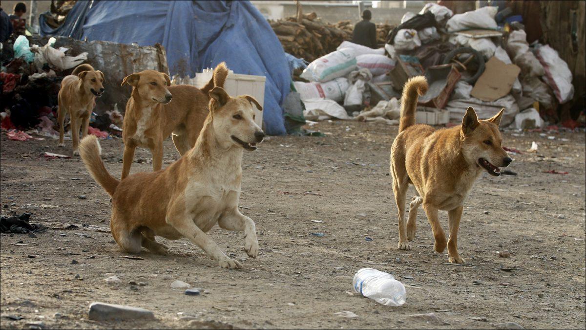سگ باوفاست اما مضر و خشن هم هست