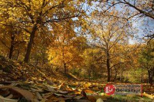 طبیعت پاییز