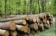 خستگی جنگلهای شمال به دلیل قاچاق چوب