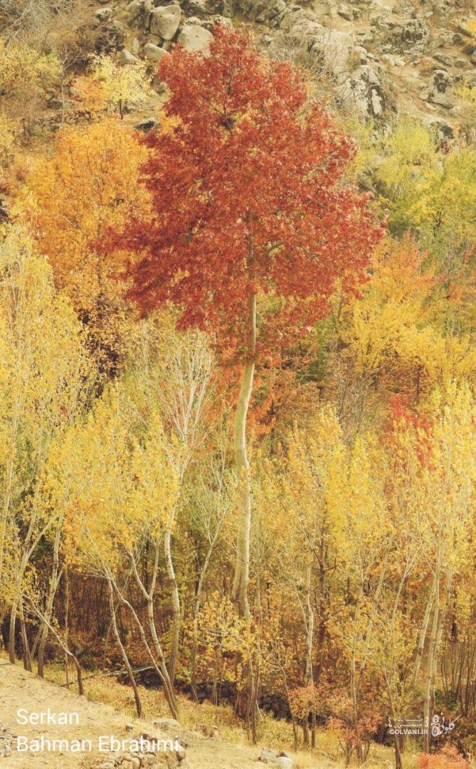 پاییز در روستای سرکان همدان