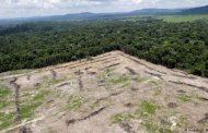 جنگل آمازون و نابودی یک میلیون زمین فوتبال