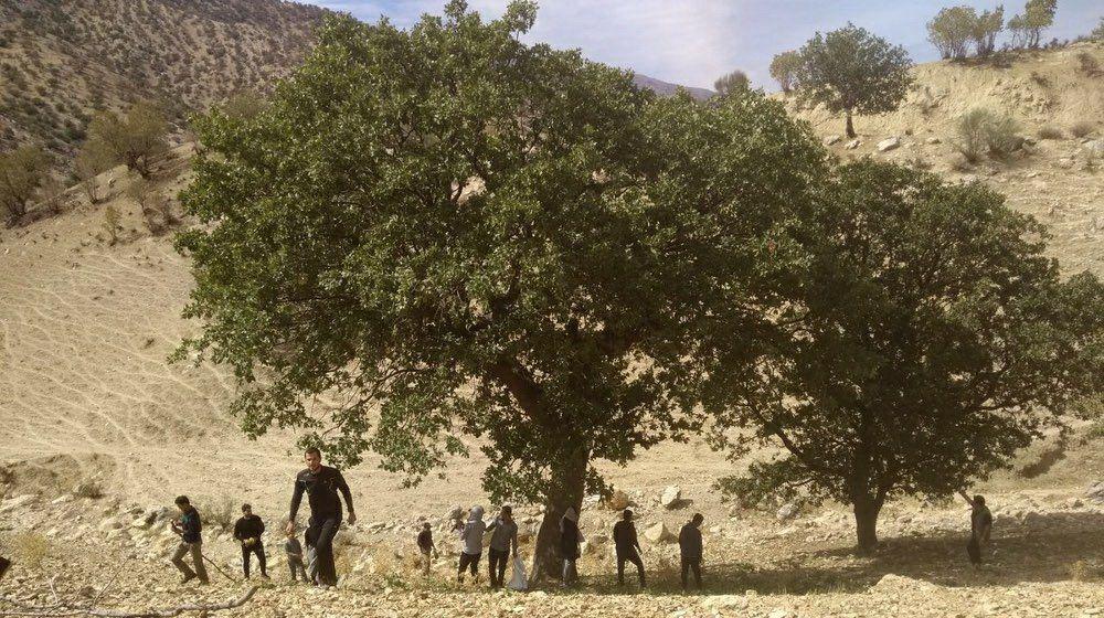 قرار سبز در شهر یاسوج استان کهگیلویه و بویر احمد