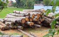 قاچاقچیان چوب با دست انداز تیرانداز رو به رو شدند