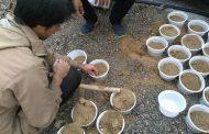 پویش داریار در لرستان آغاز شده است برای حفظ جنگلهای زاگرس