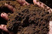 انتقال خاک به خارج از کشور ممنوع است؛ لایحه حفاظت از خاک تصویب شد
