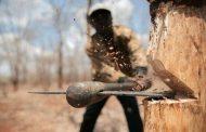 قطع درختان ارسباران باعث ممنوعیت خروج چوب از آذربایجان شرقی ممنوع شد