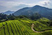 طبیعت زیبای مالزی در تور مالزی به همراه دیدنی های مالزی و آشنایی با این سفر