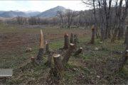قطع شدن ۱۱۶ درخت بلوط در منطقه حفاظت شده اشترانکوه لرستان در زاگرس