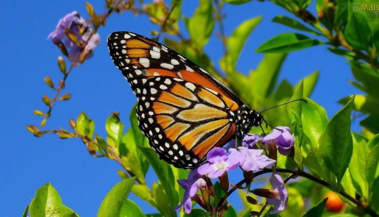 هجوم پروانهها به برخی شهرها