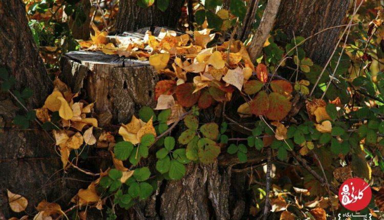تصویری از پاییز لرستان
