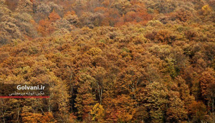 درختان جنگل هیرکانی